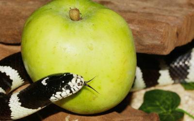 Der 'vergiftete Apfel' Wirkstoffverordnung